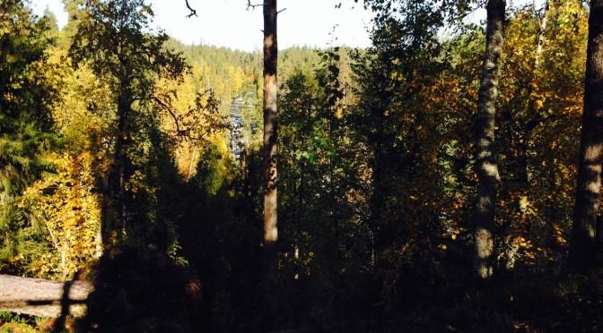 The Little Bear's Trail