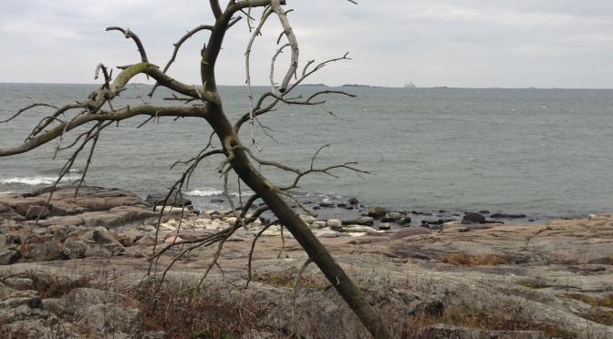 Att sam-agera med träd i Helsingfors