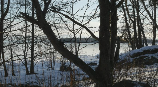 February, Month of the Rowan