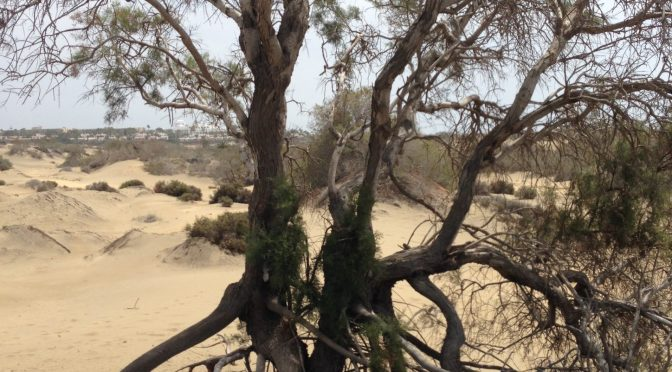 With a Tamarisk in the Wind