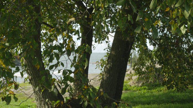 Pikavisiitti puiden luo