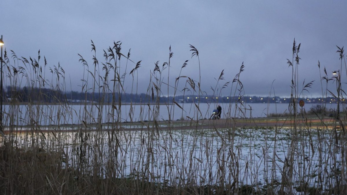 November – Month of the Reed | Performing Landscape