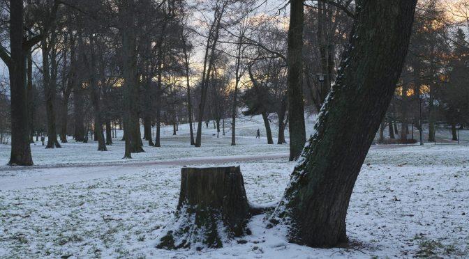 100 years of winter mornings