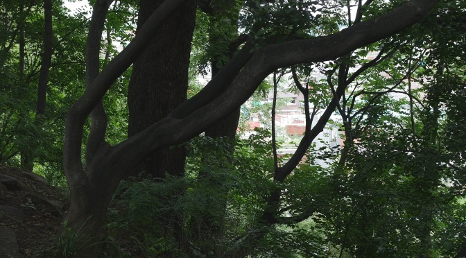 In Dalseong Park, Daegu