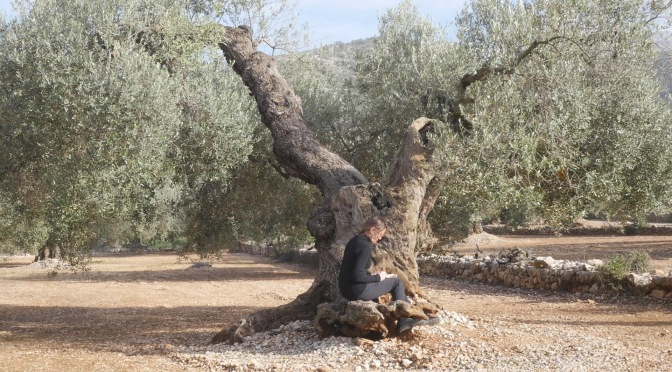 Visiting Olive Trees in Ulldecona