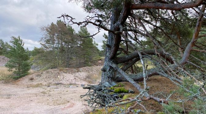 November på Örö