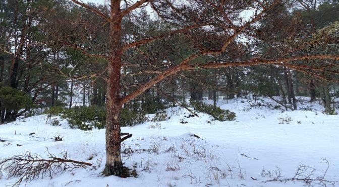 Kuinka puu kaulataan